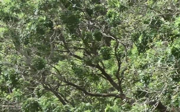DES PLANTATIONS PRIVEES POUR ACCROITRE LA COUVERTURE FORESTIERE AU TOGO