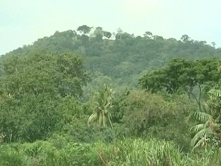 LE TOGO S'ACTIVE POUR AMELIORER SON TAUX DE COUVERTURE FORESTIERE
