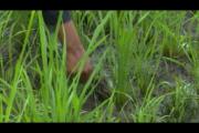 L'AGRICULTURE BIOLOGIQUE : UN SECTEUR PROMETTEUR